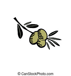 Hand drawn olive illustration