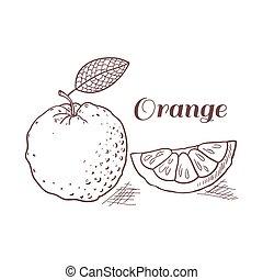 Hand drawn orange with leaf vector illustration