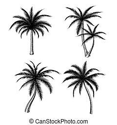 Hand drawn palm trees sketch set