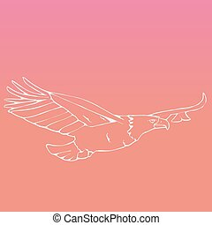 Hand-drawn pencil graphics, vulture, eagle, osprey, falcon, hawk, bird predator