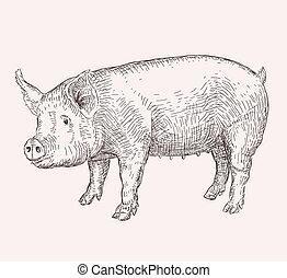 Hand drawn pig - Hand drawn illustration of pig