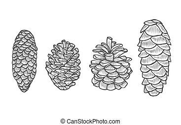 Pine cone set. - Hand drawn Pine cone set. Botanical hand ...