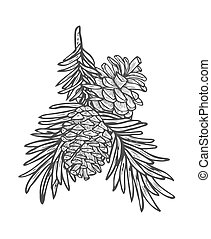 Hand drawn pine tree branch