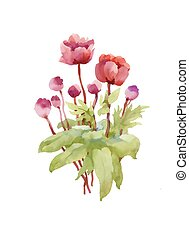 Hand drawn pink peony flowers isolated on white background