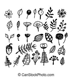 hand drawn plant