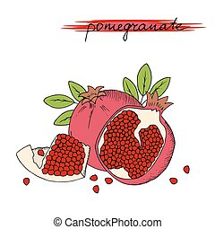 Hand drawn pomegranate with leaves isolated on white background.