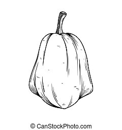 Hand drawn pumpkin isolated on white background. Vector illustration
