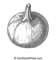 Hand drawn pumpkin isolated on white background. Vector illustration of a sketch style