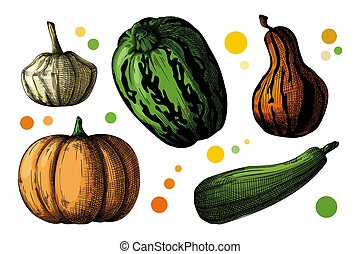 Hand drawn pumpkin set isolated on white background. Vector illustration