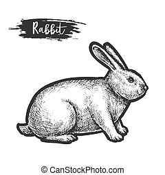 Hand drawn rabbit or bunny sketch, hare