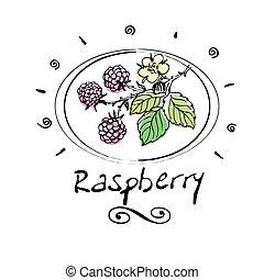 raspberry - hand drawn raspberry in vignette