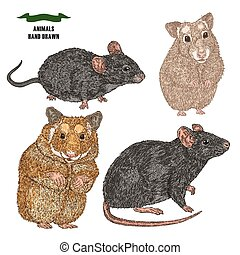 Hand drawn rat, mouse and hamsters. Colored sketch animal on white background. Vector illustration vintage