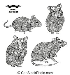 Hand drawn rat, mouse and hamsters. Black ink sketch animal...