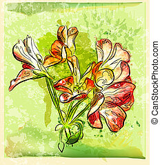 hand drawn red geranium flower
