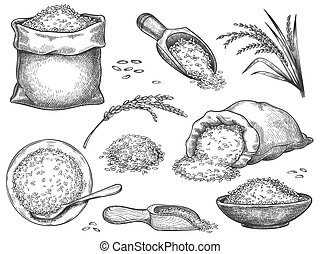 Hand drawn rice flour. Retro engraving cereal spikelets of wheat, rye, barley, basmati or jasmine rice. Grains in sack and scoop vector set