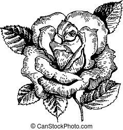 hand-drawn, rose., illustration