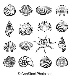 Hand drawn sea shell set