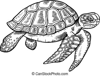 Hand drawn sea turtle