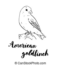 hand drawn set of graphic isolated bird American Goldfinch...