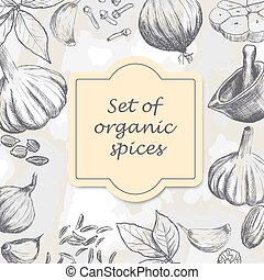 Hand drawn set of organic spices