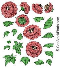 Hand drawn set of peonies