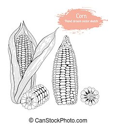 Hand drawn set vector sketch corn.