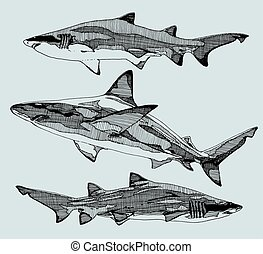 Hand drawn sharks. vector