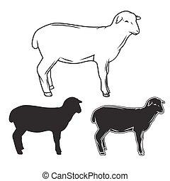 Hand drawing sheep-vector illustration. Hand drawing sheep ...