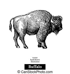 Hand drawn sketch animal Buffalo American Bison. Vector black and white vintage illustration. Isolated object on white background