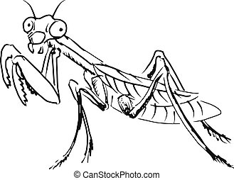 mantis - hand drawn, sketch, cartoon illustration of mantis