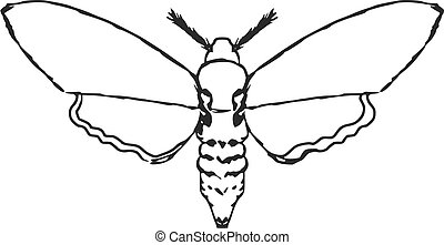 moth - hand drawn, sketch, cartoon illustration of moth