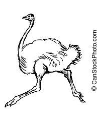 ostrich - hand drawn, sketch illustration of ostrich