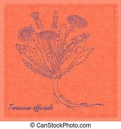 Hand Drawn Sketch of a Dandelion Flower