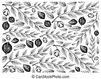 Hand Drawn Sketch of Black Walnuts Background - Illustration...
