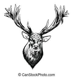 Hand drawn sketch of deer in black isolated on white background. Detailed vintage style drawing. Vector illustration