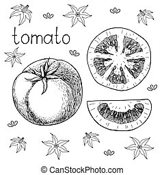 Hand drawn sketch of fresh juicy tomato. Vector black and white illustration. Decorative pattern with tomato flowers on background. Isolated on white