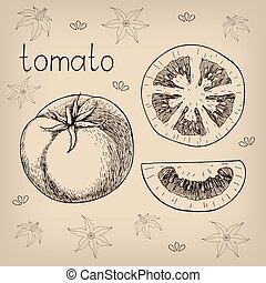Hand drawn sketch of fresh juicy tomato. Vector vintage style illustration. Decorative pattern with tomato flowers on background. Isolated on white
