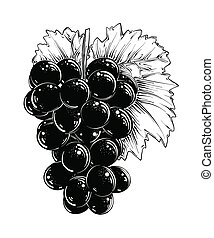 Hand drawn sketch of grapes in black isolated on white background. Detailed vintage style drawing, for posters, decoration and print.. Vector illustration