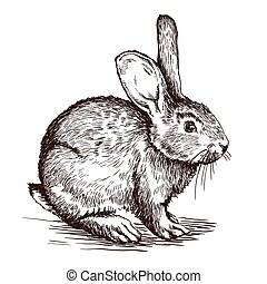 hand drawn sketch of  rabbit
