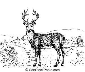sketch of reindeer