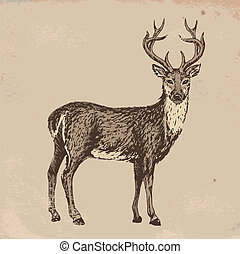 reindeer - Hand-drawn sketch of reindeer on old grunge paper