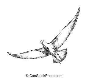 Hand drawn sketch of seagull in black color. Isolated on white background. Drawing for posters, decoration and print. Vector illustration
