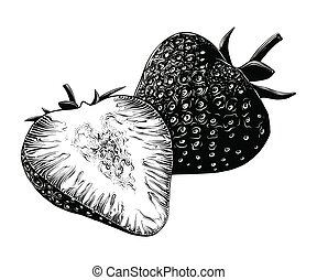 Hand drawn sketch of strawberry in black isolated on white background. Detailed vintage style drawing, for posters, decoration and print.. Vector illustration