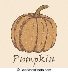 Hand drawn sketch pumpkin.