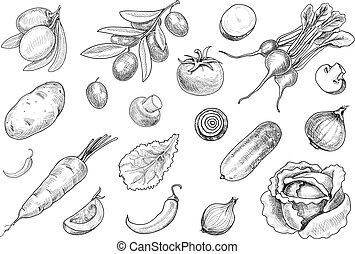 Hand drawn sketch various vegetables set