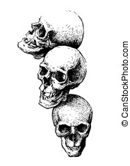 Hand drawn skulls illustration. Vector design element