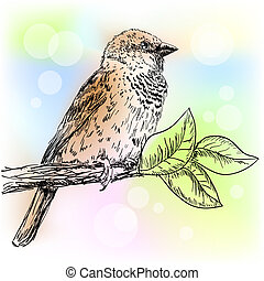 Hand drawn sparrow bird sitting on a branch