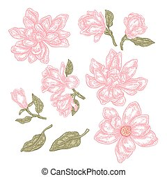 Hand drawn spring magnolia flowers and leaves. Vintage floral collection. Vector illustration.