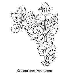 Hand drawn strawberry bush with berries, contour vector illustra