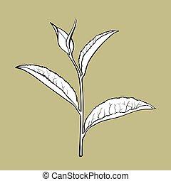 Hand drawn tea leaf, side view sketch, vector illustration